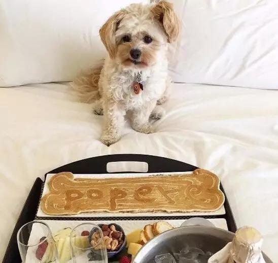 流浪狗被美食家救助,这大概是最暖心的故事了~