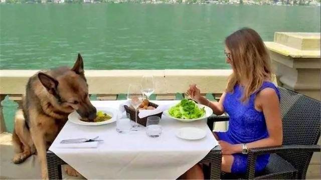 一条德牧成为最富有宠物狗,奢华晚餐不逊色于富二代