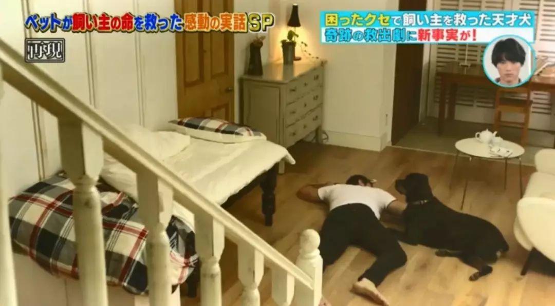 主人生病报警后晕倒,狗狗机智打开紧锁的门救了他一命!