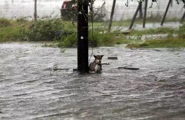 当你一无所有时,请不要忘记,你还有你的狗狗