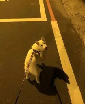 每天见面的邮递员被调走,一个月后再重逢,狗狗:我好想你啊!