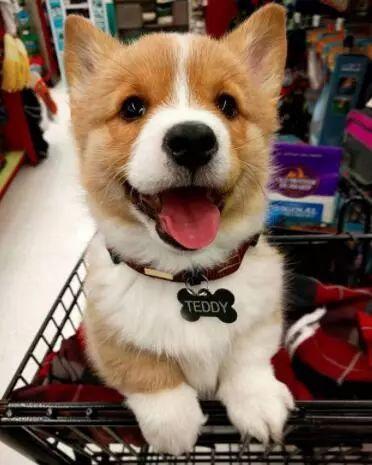 """因为""""相由心生"""",所以狗狗才这么可爱啊!"""