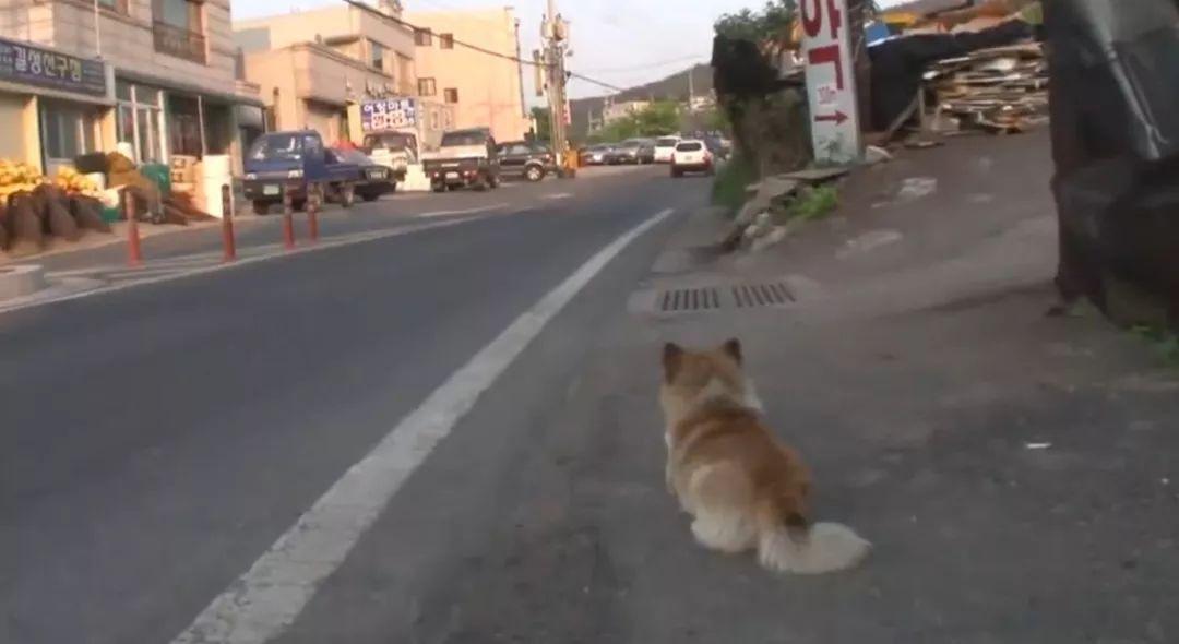 """因为被其它狗欺负过,这只狗狗展开了""""复仇之路"""""""