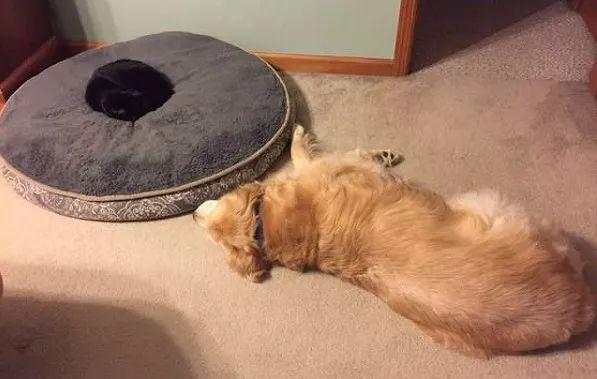 狗狗去世后,黑猫抱着它的项圈不肯丢:你在哪儿,我好想你!