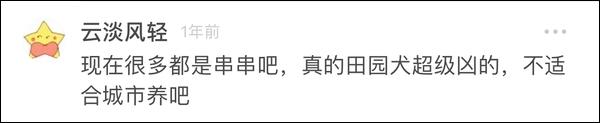 杭州大爷带中华田园犬办证被拒:属禁止饲养犬只