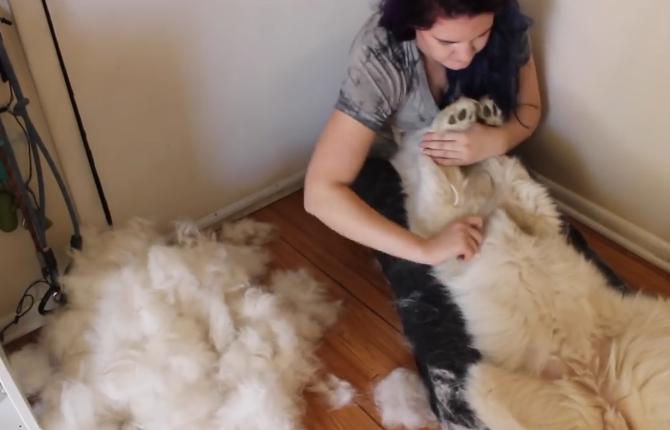 """养了两只大白狗,妹子的""""噩梦""""来了:养的是羊吧"""