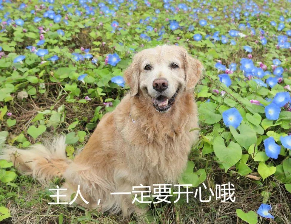 痛失爱犬的作曲家,整日沉浸于悲痛中,收到了一份特殊的礼物