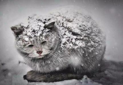 天气开始变冷了,请善待那些无家可归的流浪生命!