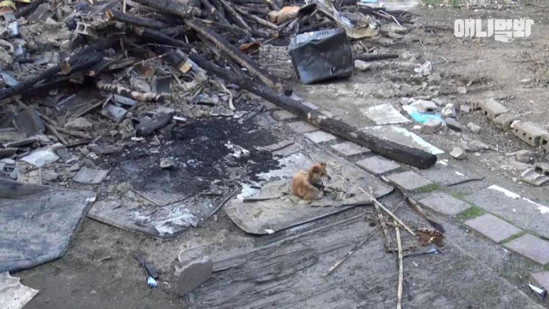 家里发生了一场大火,老人也不知所踪,狗趴在废墟中不断哀鸣