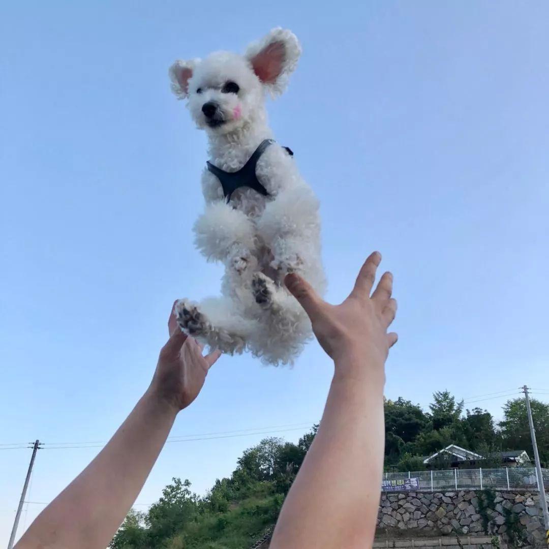 把狗狗带到高处或抛起来,是一种不好的待宠方式