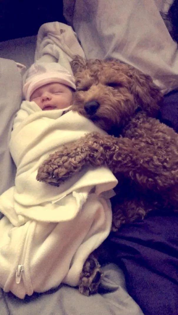 在国外,有一些娃,是狗狗陪伴长大的!