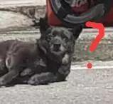 看到流浪狗倒在路上一动不动,热心小哥过去救助...