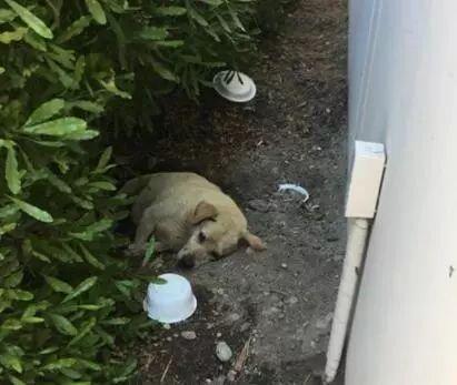 狗狗被遗弃后在原地死守,饿了就吃泥土