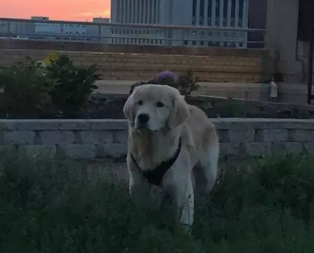狗狗走了100多公里去寻找遗弃它的主人,只为了…咬他一口!