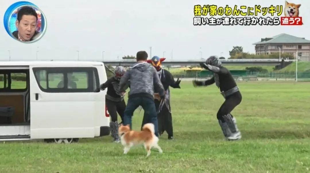 日本测试:如果在狗狗面前遭人绑架,它会做出怎样的反应?