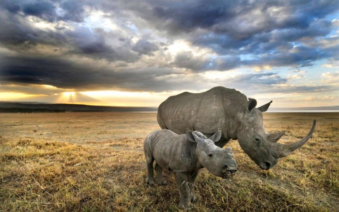 微软发布野生动物主题的Win10免费壁纸包