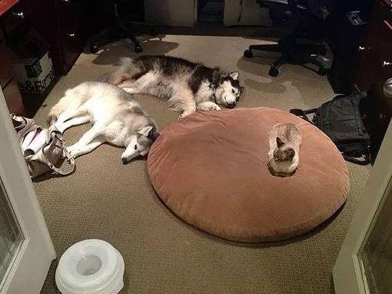 家里同时养了猫和狗是什么体验?相爱相杀!每天都要看它们秀恩爱