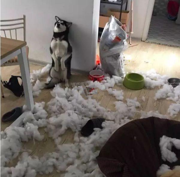 养一条狗,一年内的花费,铲屎官们算过吗?