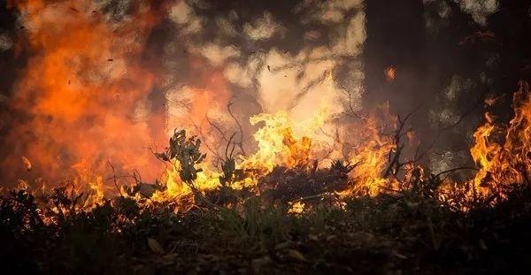 """美国加州遭遇史上最严重的野火,一条哈士奇变成了""""大黄狗"""""""