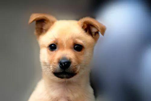 家里有一只可爱的狗狗,看这些照片,就感觉到幸福!