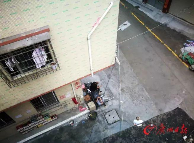 高空坠狗!女子被砸瘫痪!无奈之下,她把整栋楼的业主和租户告了