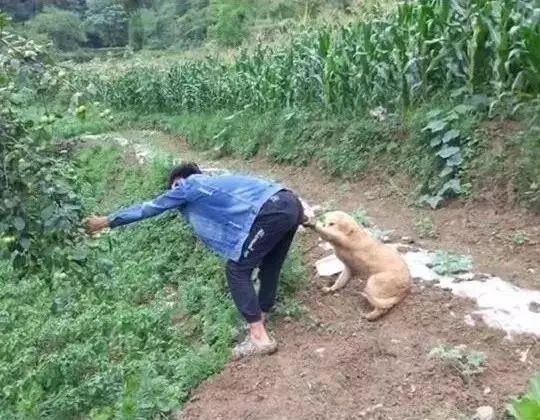 养狗千日,用狗一时哈哈
