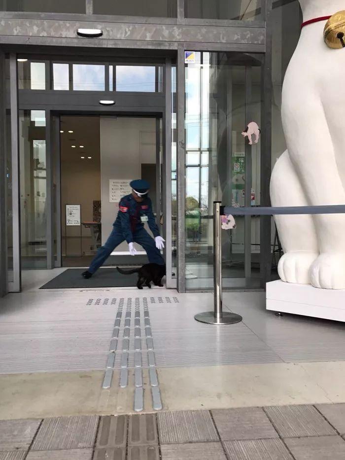 日本这只猫火了,每天硬闯美术馆!