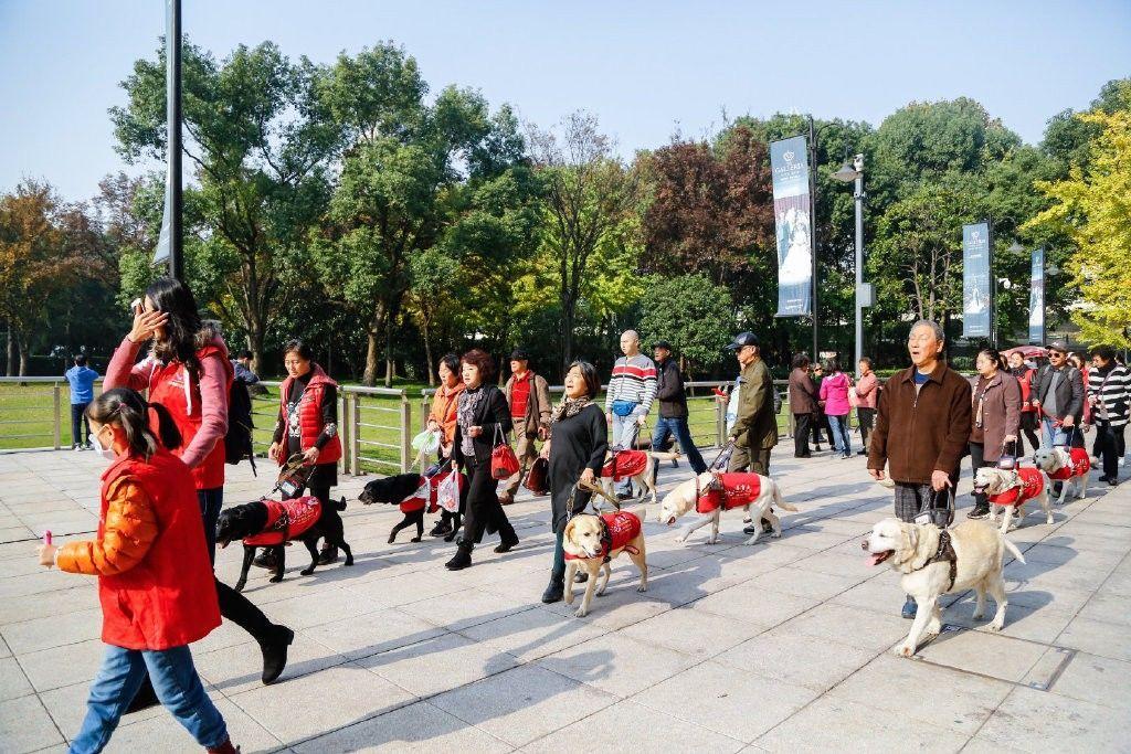上海音乐厅邀请10只导盲犬进入会场,陪伴主人一同欣赏音乐会