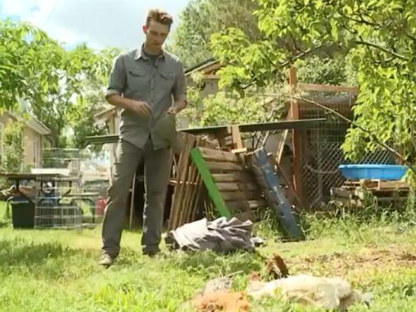 4岁哈士奇出去闯祸,养它的主人面临27项攻击动物的罪名!