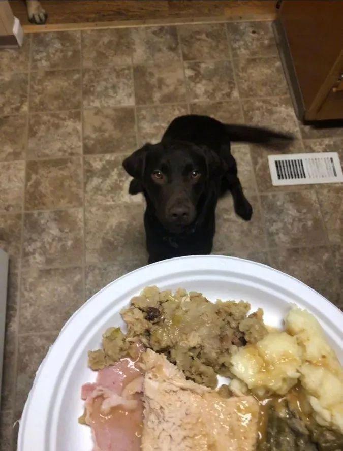 铲屎官为狗子精心准备一顿美味大餐,它激动得太过了!