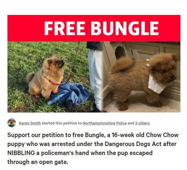 小松狮袭警遭拘留,还面临9个月监禁,5800人请愿:放了它!