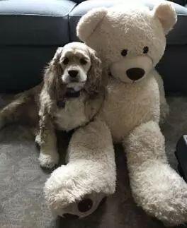 把狗子最喜欢的玩具放进洗衣机,狗狗很紧张地盯着