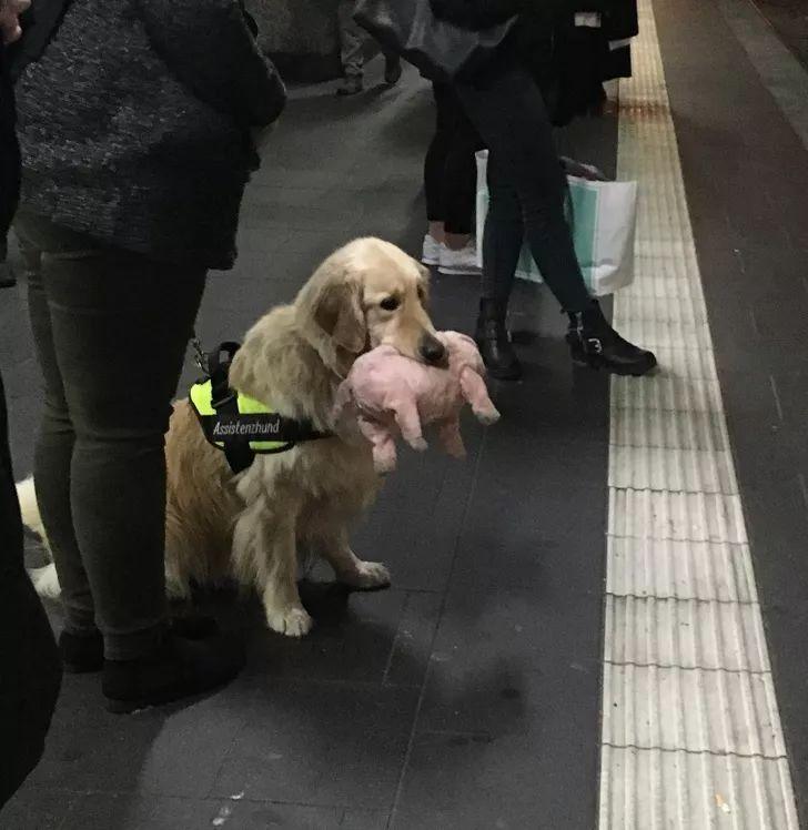 狗狗和它们最喜欢的玩具,真是长眼见了!