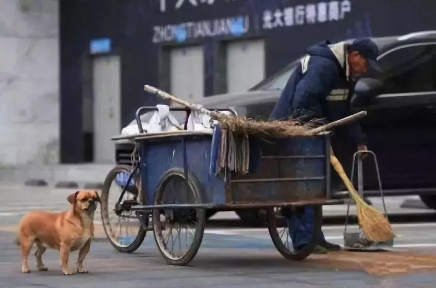 一人一狗,默默地清理着街道,变成了长春一道温馨的风景
