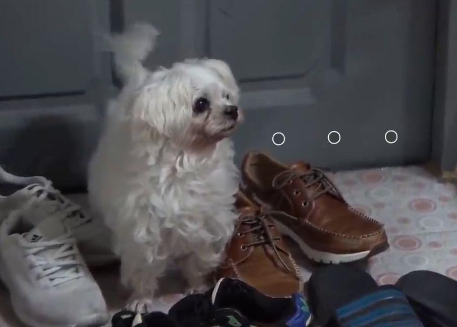 送重病的狗子去医院,医生:没病,演技太好了,想出去玩!