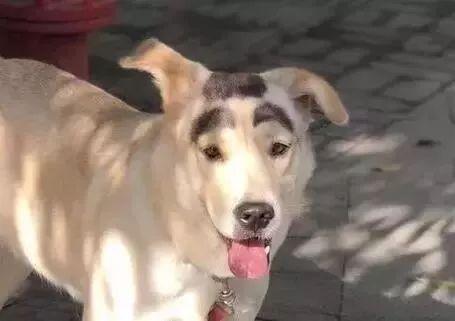 """湖南商学院附近的一条流浪狗自带""""妆容"""",在网络上走红了"""