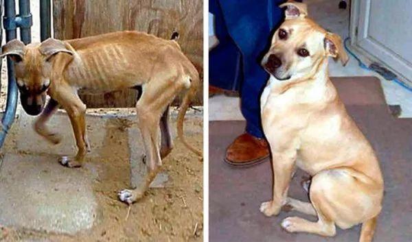 动物在流浪前和流浪后的对比照片,只因遇到了好心人