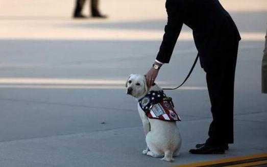 服务犬Sully趴在老布什灵柩前的照片,被国外媒体关注和报道