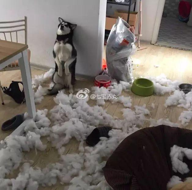 自从养狗,家里人都怀疑我干了不正生意(每月开销太大)