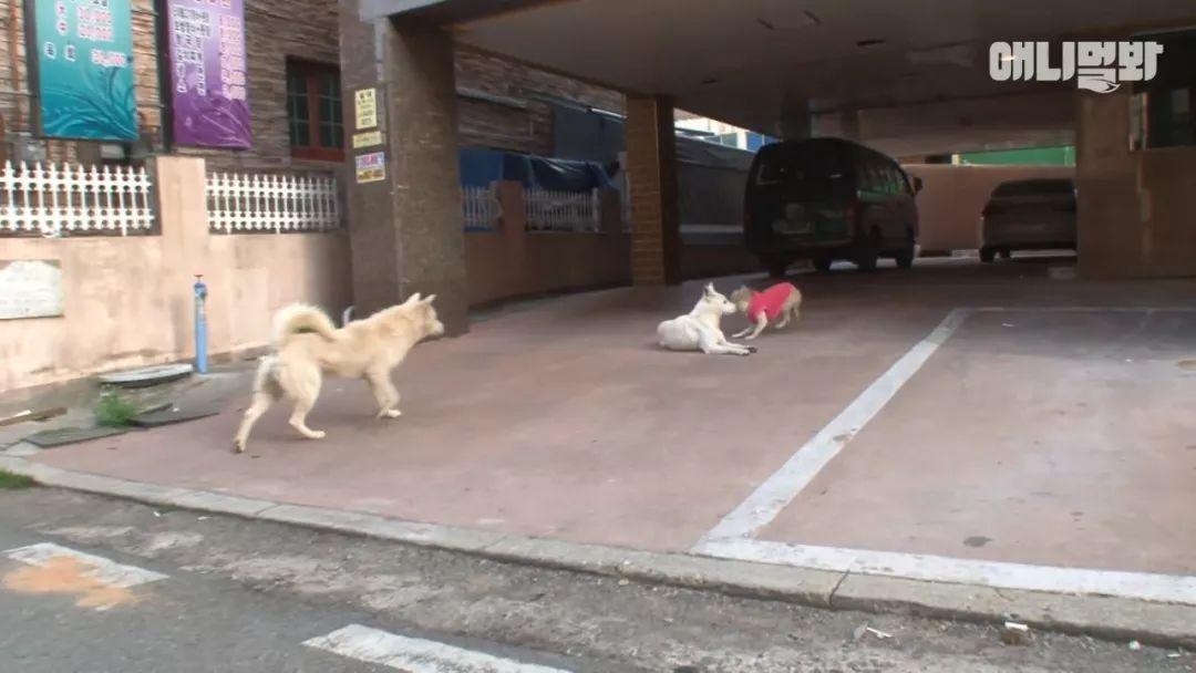 两只小公狗爱上了同一只小母狗,最后的结局有些扎心!