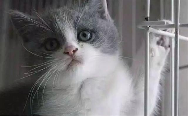 主人高烧后得知是猫抓病,体弱者易患病