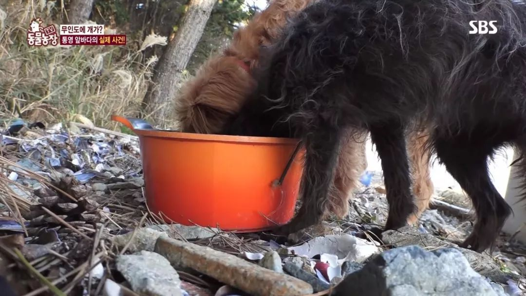 韩国无人岛上被弃养了两只狗狗,主人任它们在岛上自生自灭