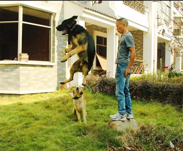 训不好狗狗,不要再说是品种问题,注意四个小方法!