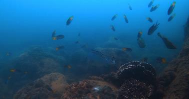 佳兆业国际乐园集团开展珊瑚保育行动 助力海洋生态恢复