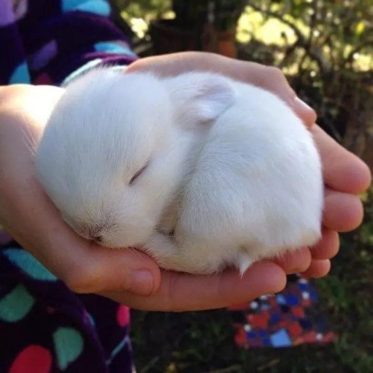 除了常见的猫和狗之外,其实人类饲养的毛孩子还有很多