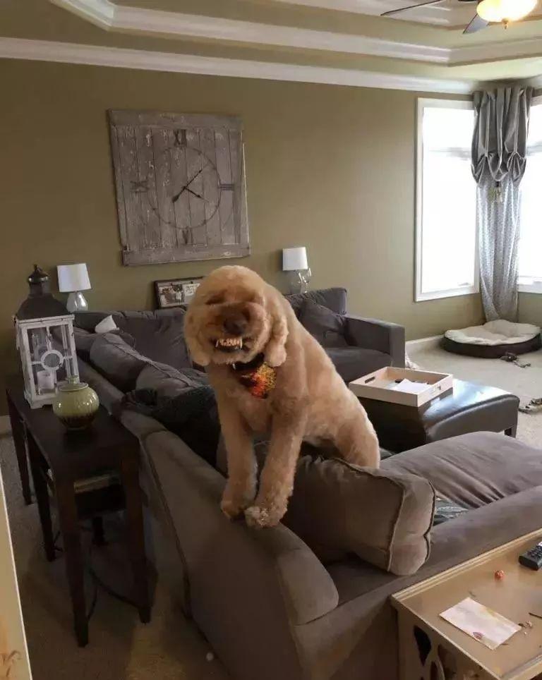 网友吐槽,狗狗欢迎自己回家的仪式,有点小猥琐