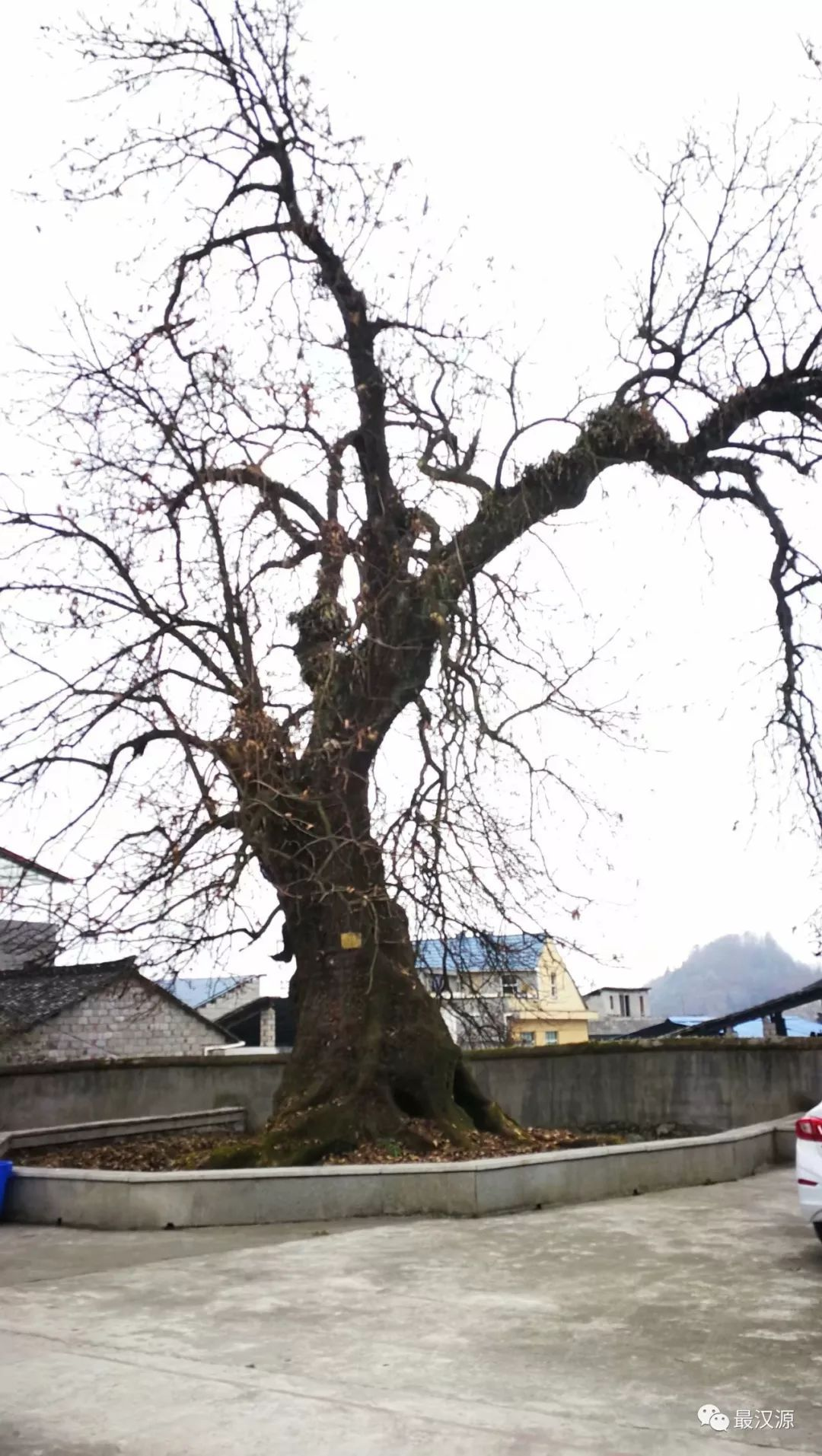 印象皇木场:没有中国西南的皇木,就没有元明清的北京,就没有今天的紫禁城-雪花新闻