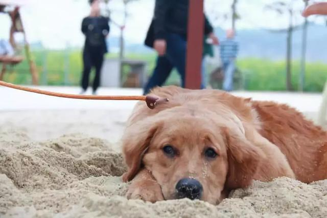 新手养狗需掌握四个要点,解决养狗难题,令爱犬更受众人喜爱!