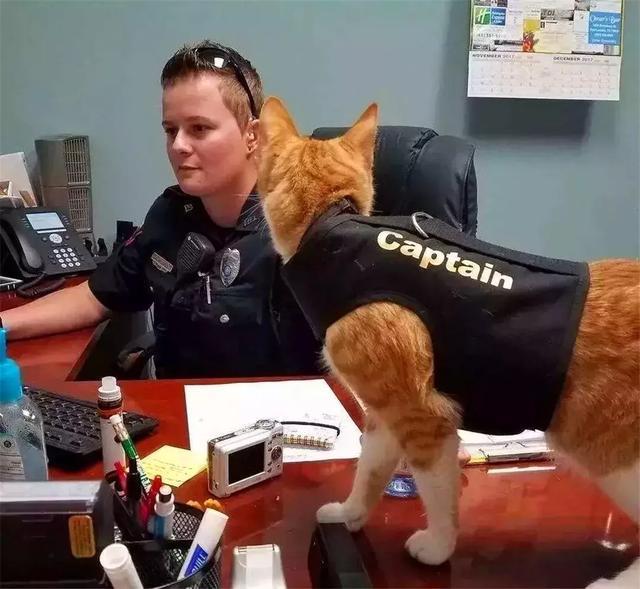 教猫咪学狗狗握手,学会六点训猫技巧,带猫掌