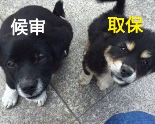 """安徽刑警大队院儿里的两只流浪小狗,取名""""候审""""、""""取保"""""""